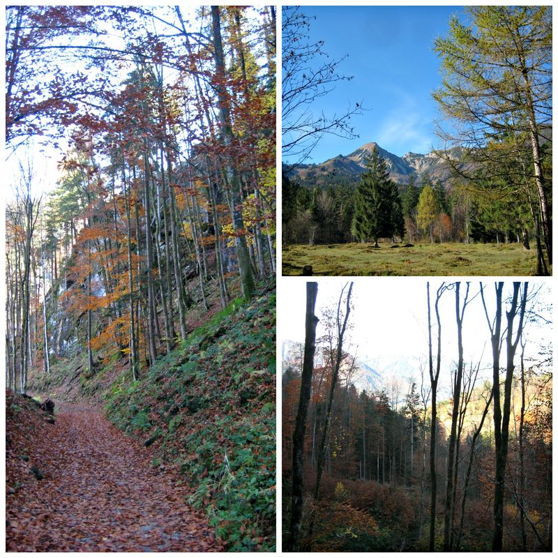 PicMonkey Collage_Herbstwald